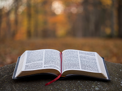 Bible Reflection
